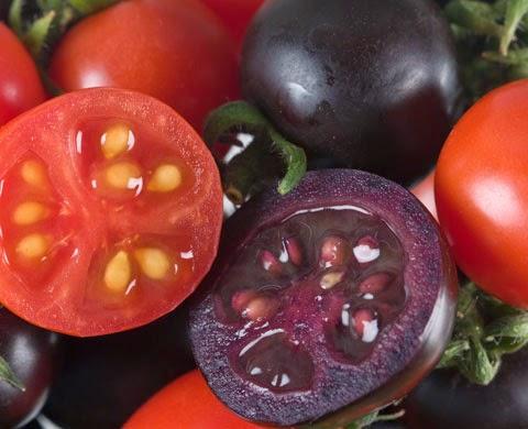فوائد الطماطم البنفسجية في الوقاية من الامراض