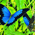 A borboleta e a lagarta