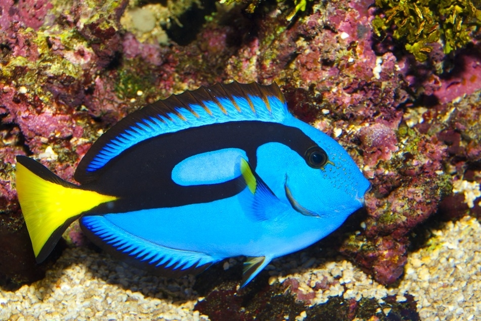 Golden eye view top 15 most beautiful fishes of the world for Best fish in the world