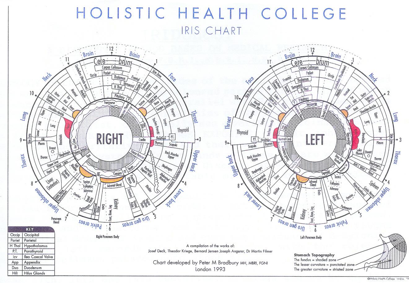 Healing ways iridology charts iridology charts geenschuldenfo Gallery