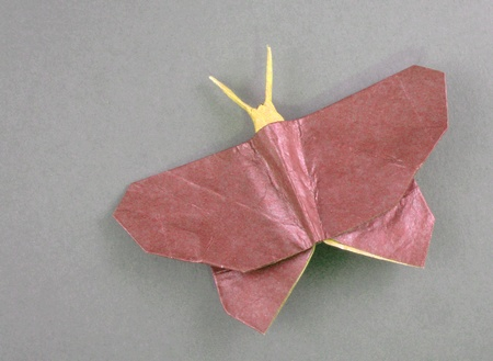 How To Origami Butterfly. origami Butterfly Maekawa 2 3D
