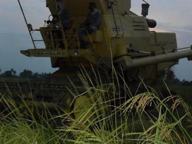 mesin padi