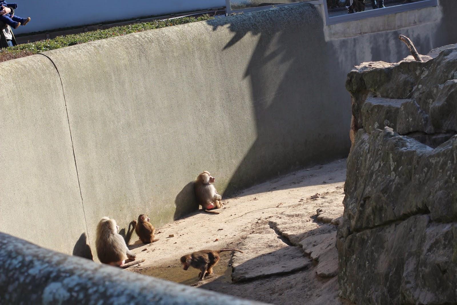 Paviane Berliner Zoo in der Sonne