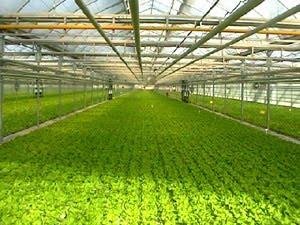 sotir  ( تكنولوجيا الزراعة )