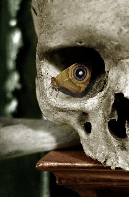 mariposa en el ojo de un cráneo simulando un ojo