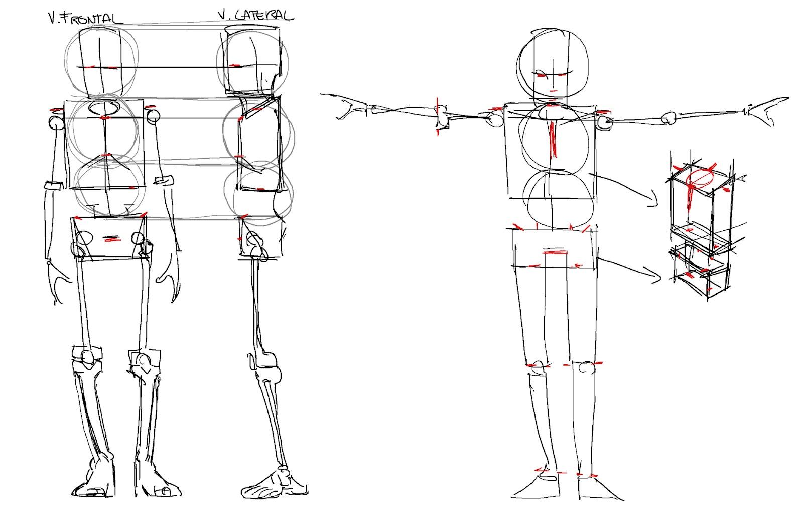 El Blog del Profe de Dibujo.: Sistema de proporciones del Profe.