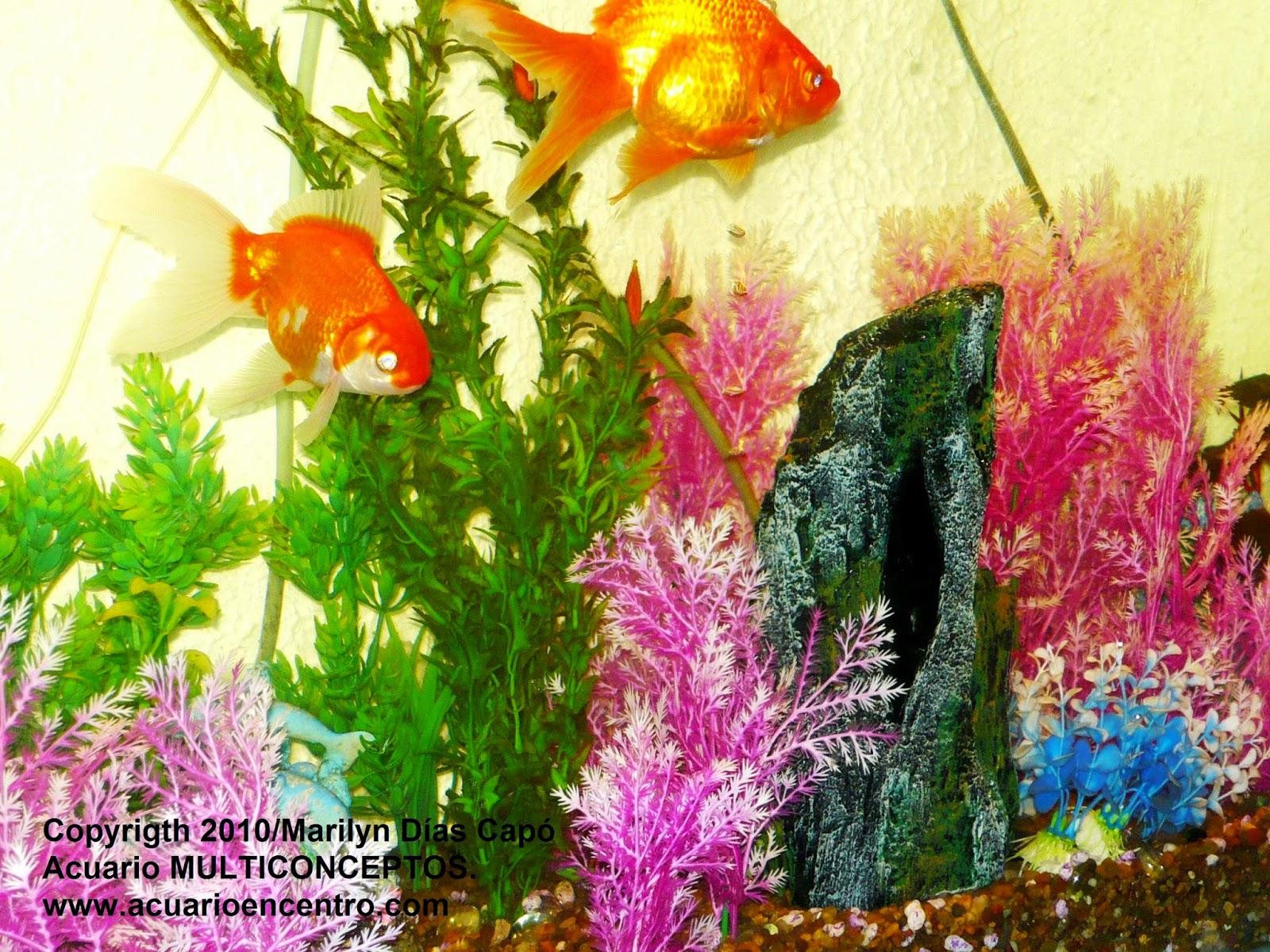 Peces tropicales de agua dulce acuario y biodiversidad for Peces tropicales acuario