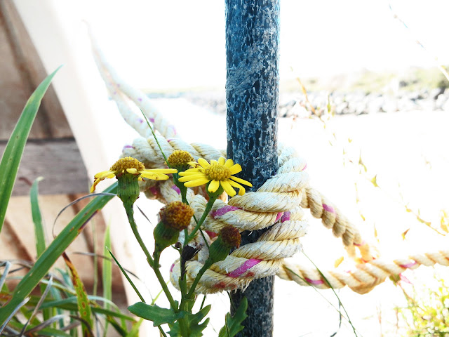 Boat, rope and yellow flowers in October