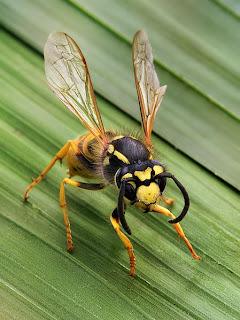Kitsap county pest control, bremerton pest control