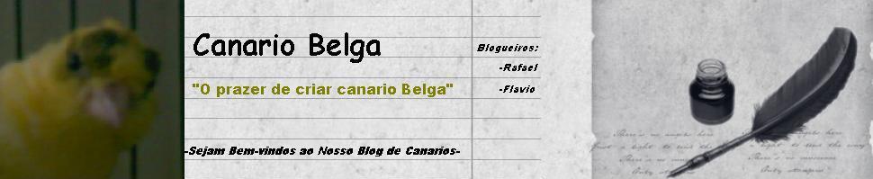 Canário Belga