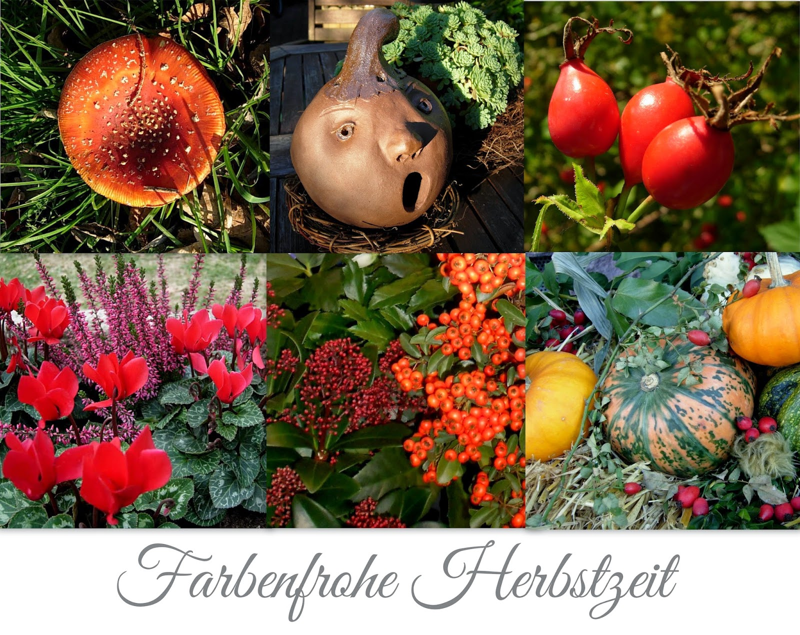 Farbenfrohe Herbstzeit