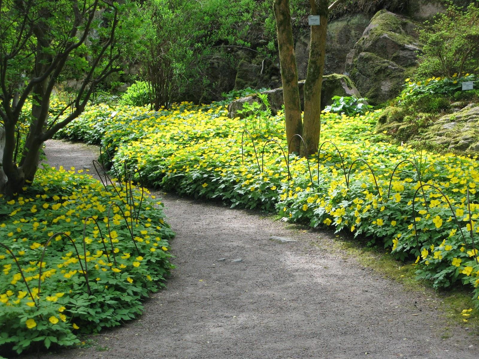 Bunndekkende planter skygge