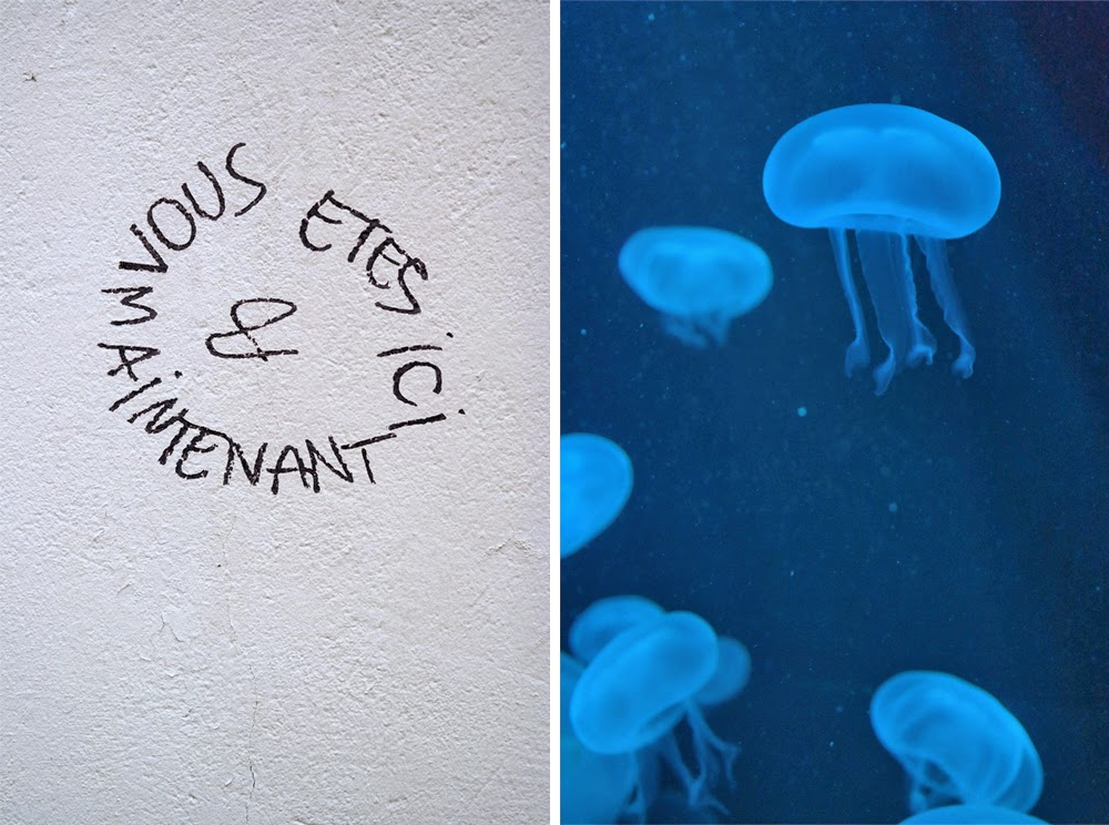 "Graffiti saying ""Vous etes ici et maintenant"" / Jellyfish"