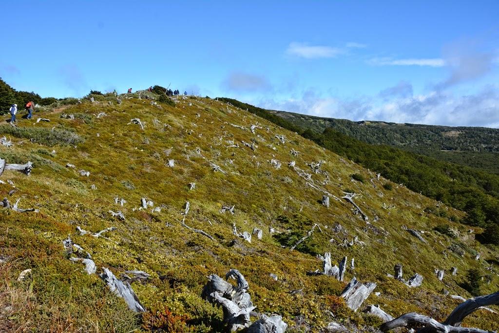 Magellan Forest Reserve