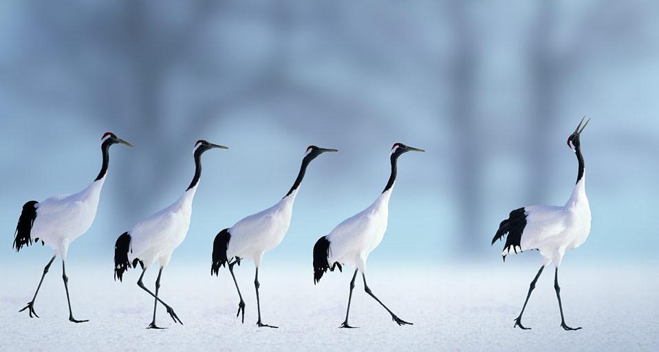 water birds bing wallpaper - photo #13
