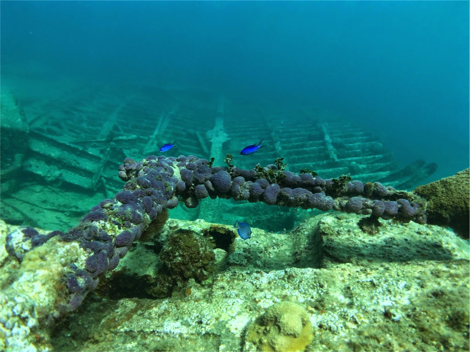 Shipwreck Snorkel Grand Cayman \\ Princess Cruises