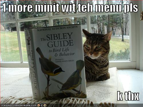 funny birds. AF- Funny bird shirt by