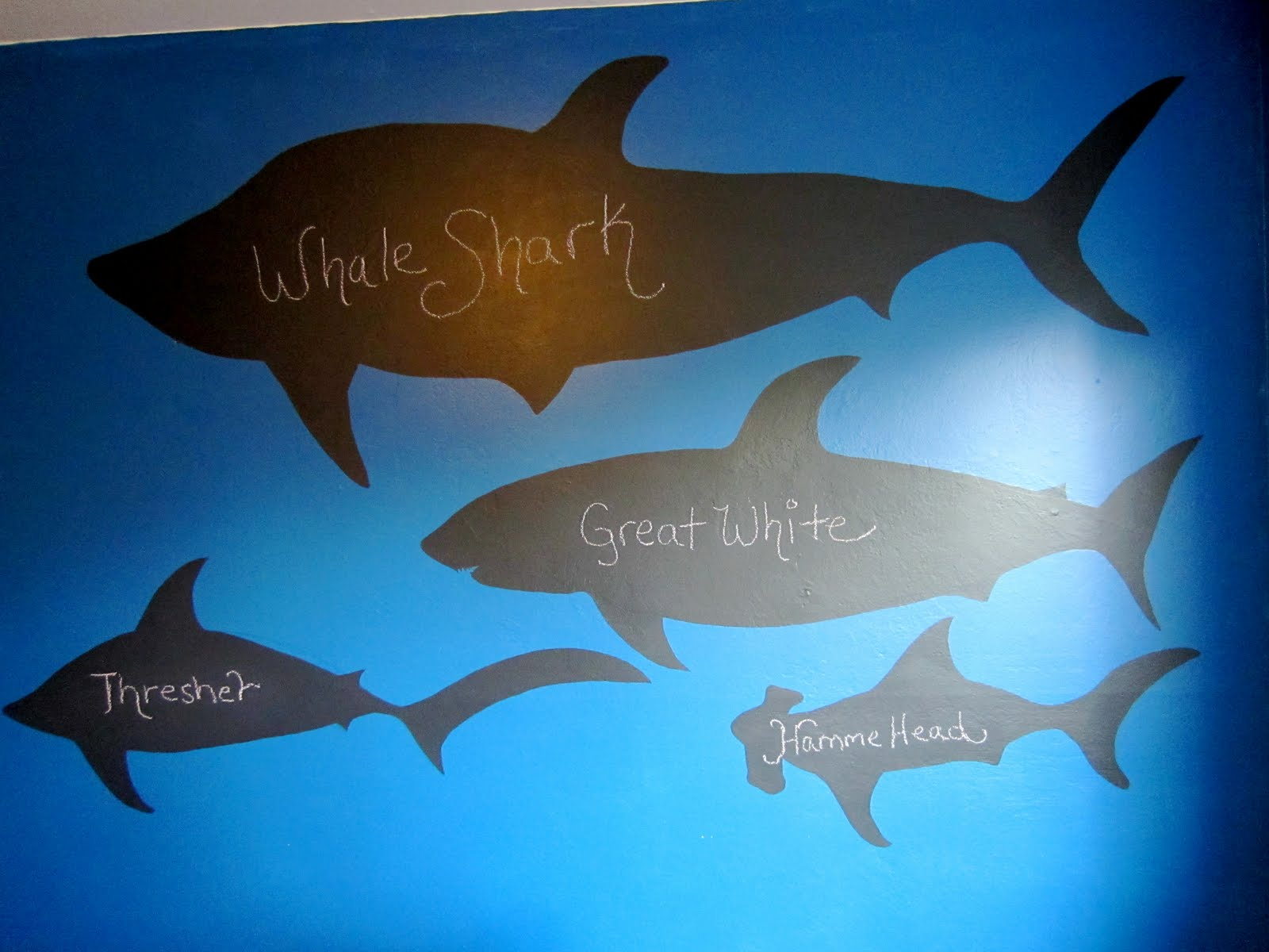Caleb Has A Shark Themed Room So I Got The Idea To Paint Various Sharks  With Chalkboard Paint. That Way He Can Be Creative And Color In The Sharks  How He ...
