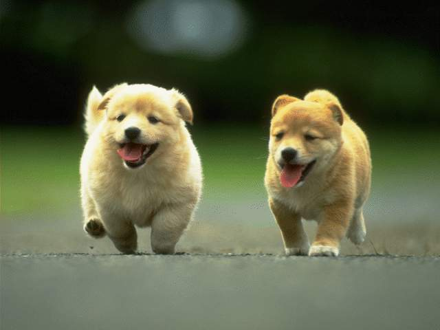 Cute Pet Dogs 8