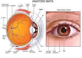 Cara Menjaga Kesehatan Mata - Sumber Penting Dan Saran Untuk Perawatan Mata Anda