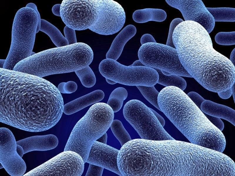 Miliony bakterii czyha na Ciebie wszędzie