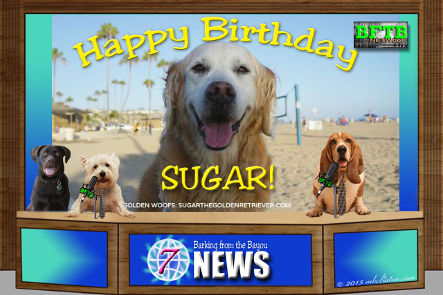 BFTB NETWoof News celebrates Sugar's birthday