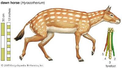 Hyracotherium los primeros caballos