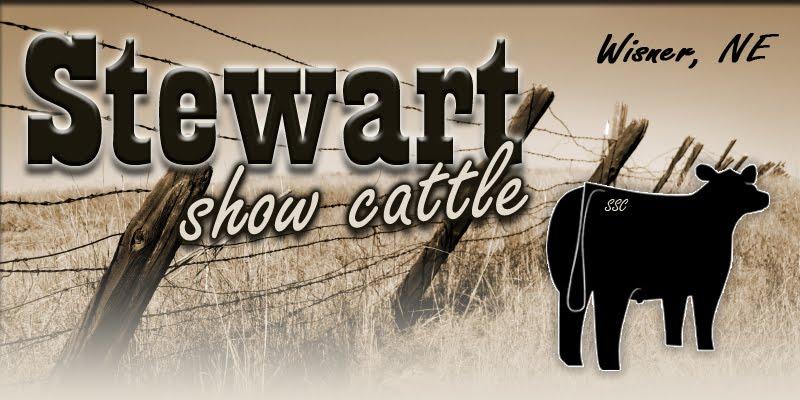 Stewart Show Cattle