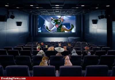 A movie theatre for dogs?