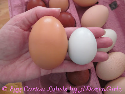This is the 95 gram egg next to an average Ameraucana egg.
