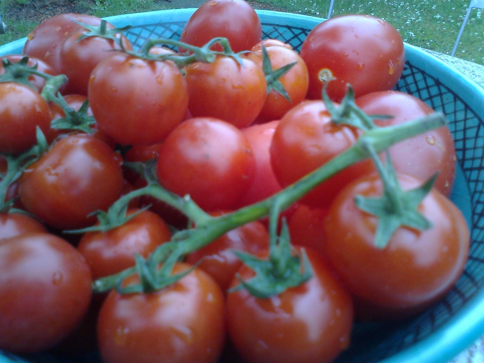 krydrede kødboller i tomatsovs