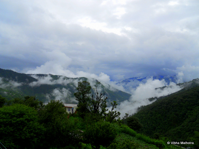 The white and green cover at Chail, Himachal Pradesh. Our decision to visit Chail in Himachal Pradesh couldn't have come at a better time. It was during the monsoons and all common sense was advising us against the trip. But we wanted to see greenery and clouds. And that is what we got. Plenty of it. Come see for yourself. This strange looking plant was located right outside our hotel. I do not know the name. Can someone help in identifying it? Some ferns emerging from behind the rocks. We spent quite some time trying to identify the various types of ferns we were seeing. These are apparently compound ferns. Dazzling view of the valley from Kali mata ka tibba at Chail. Notice the various shades of green and the play of the light. A green carpet of grass right outside the world's highest cricket ground, located in Chail. Makes you feel like removing your shoes and running through the grass. This isn't a bad quality photograph. It is just the clouds who have started descending and are making the view blurred. Thick layer of Moss covering the hill on the side of the road. We noticed that the locations that receive good amount of sunlight were preferred by this plentiful plant. Clouds descending into the green valley. This was the view from our balconey. We were indeed blessed. Clouds arising out of the valley. This was the second time I had seen this phenomena. The first time was also in Himachal, but at Deotsidh.