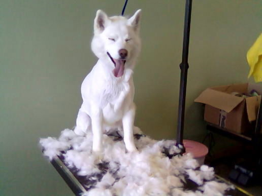 The Friendly Groomer Getting Ready For Spring Shedding