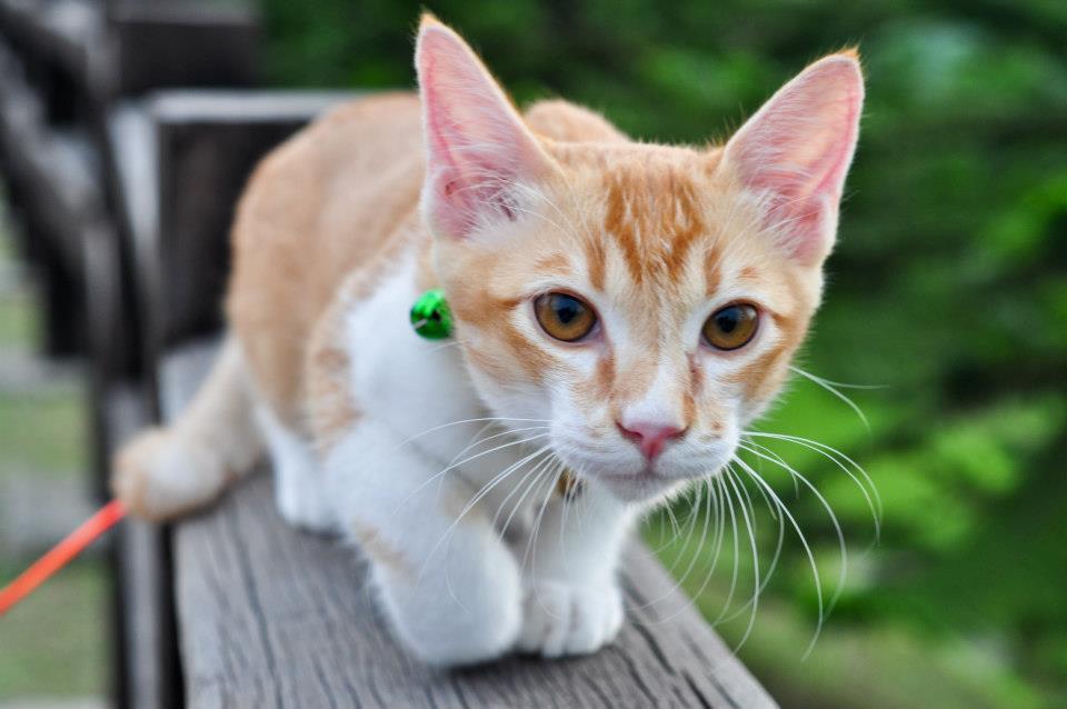 Mutiara Mra Hukum Kucing Kesayangan