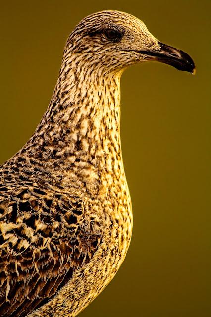 Fotografía de una gaviota en el blog