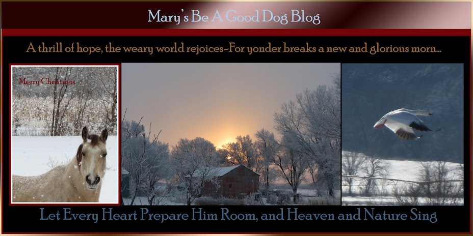 Mary's Be a GoodDog Blog