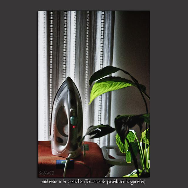 Plancha y planta en interior doméstico