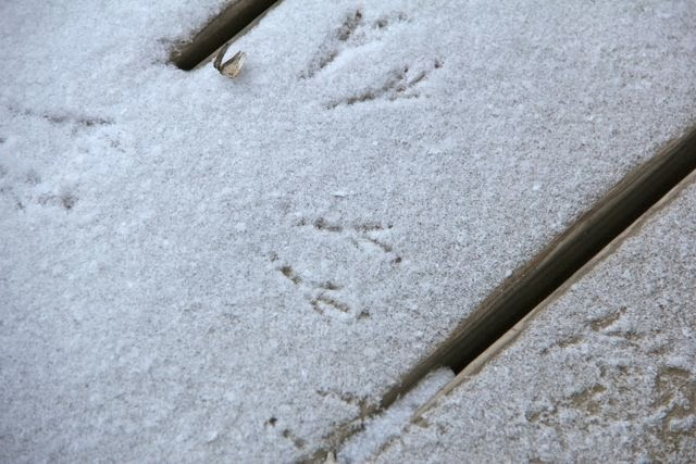 bird tracks on snow-dusted deck