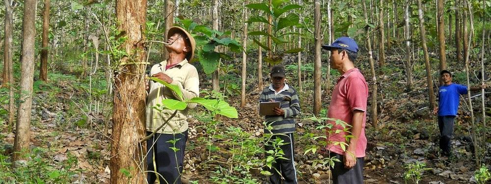 FKKM Dorong Perbaikan Tata Kelola Kehutanan Masyarakat