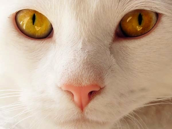 Here Are 24 Awesome Things You Didn't Know About Animals. #11 Just Made My Week. - A cat's nose imprint is unique like a human fingerprint