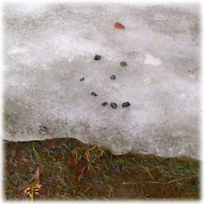 Død snømann
