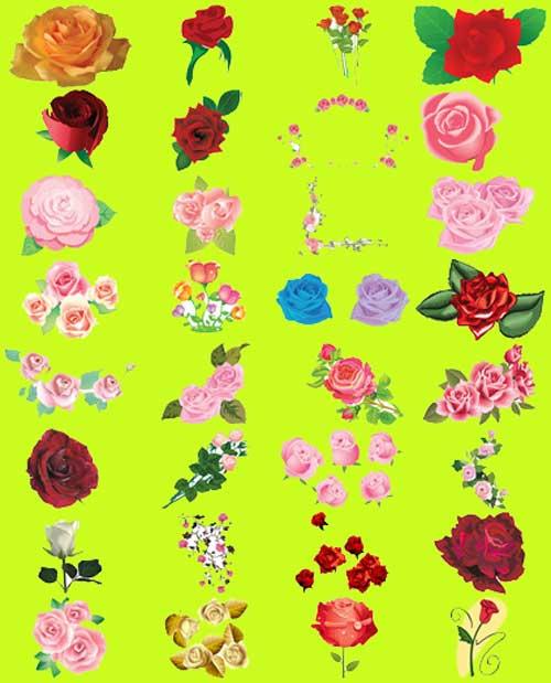 100 roses vector hoa hồng cực đẹp