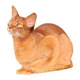 cowering cat