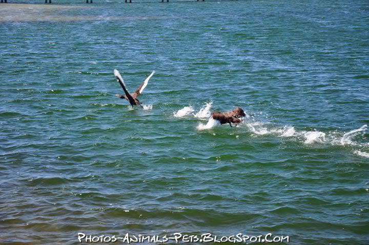 http://4.bp.blogspot.com/-SRlq7R9pMac/Ttzy2J3VHoI/AAAAAAAACd0/q8e-gXjNlrk/s1600/swan.jpg