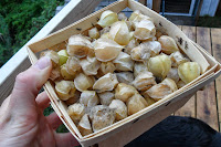 Basket of ground cherries