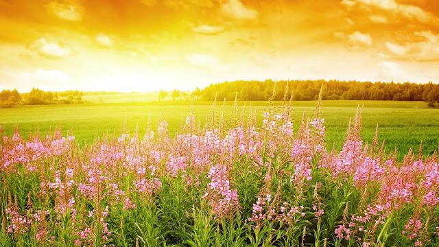 Zonsondergang en bloemen