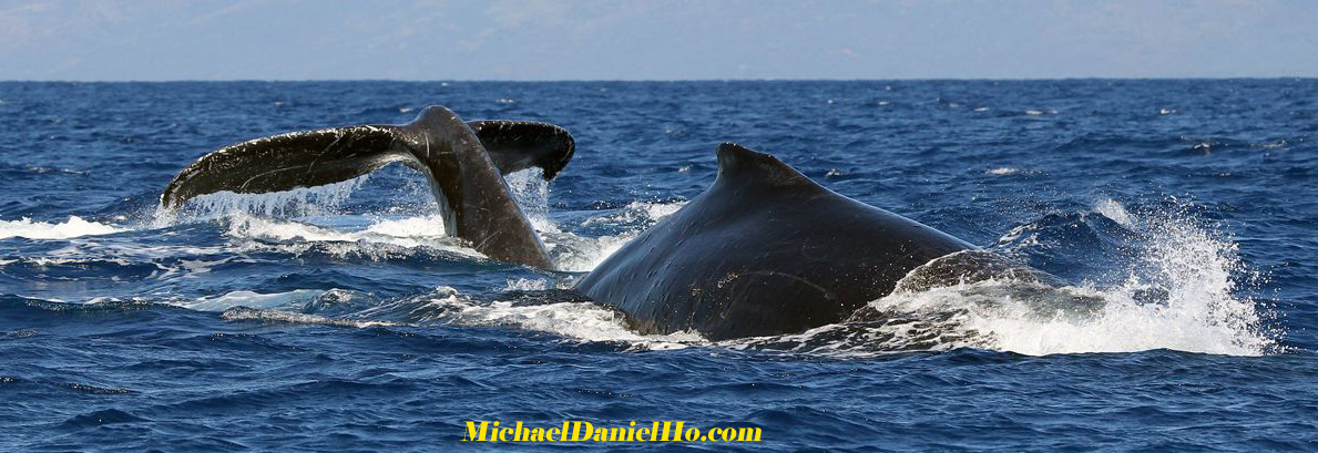 Michael Daniel Ho - The Wildlife Ho-tographer