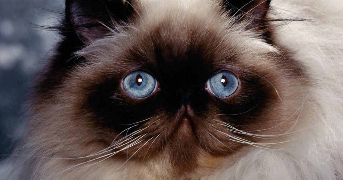 Quot Dunia Kucing Quot Info Mengenai Kucing Cat