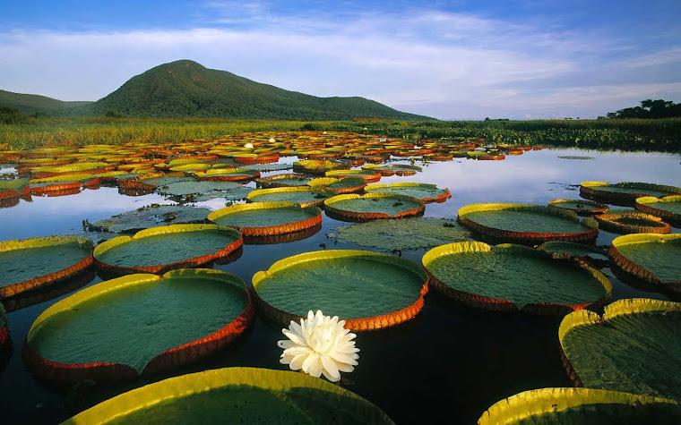 Pantanal en la frontera de Uruguay y Brasisl. Fuente, Iniciativa Latinoamericana del Paisaje