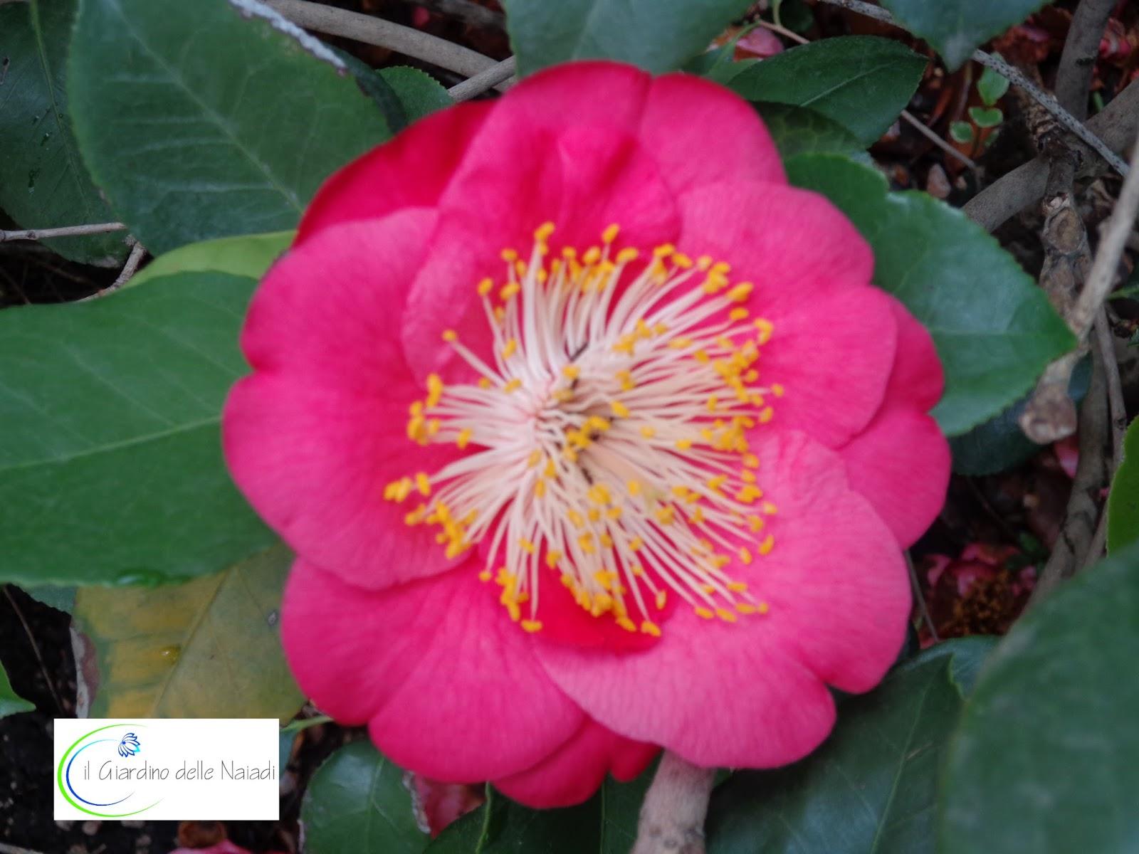 il giardino delle naiadi: gennaio 2016 - Piccolo Giardino Sinonimo